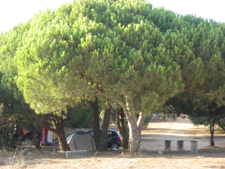 Camping Ingrina